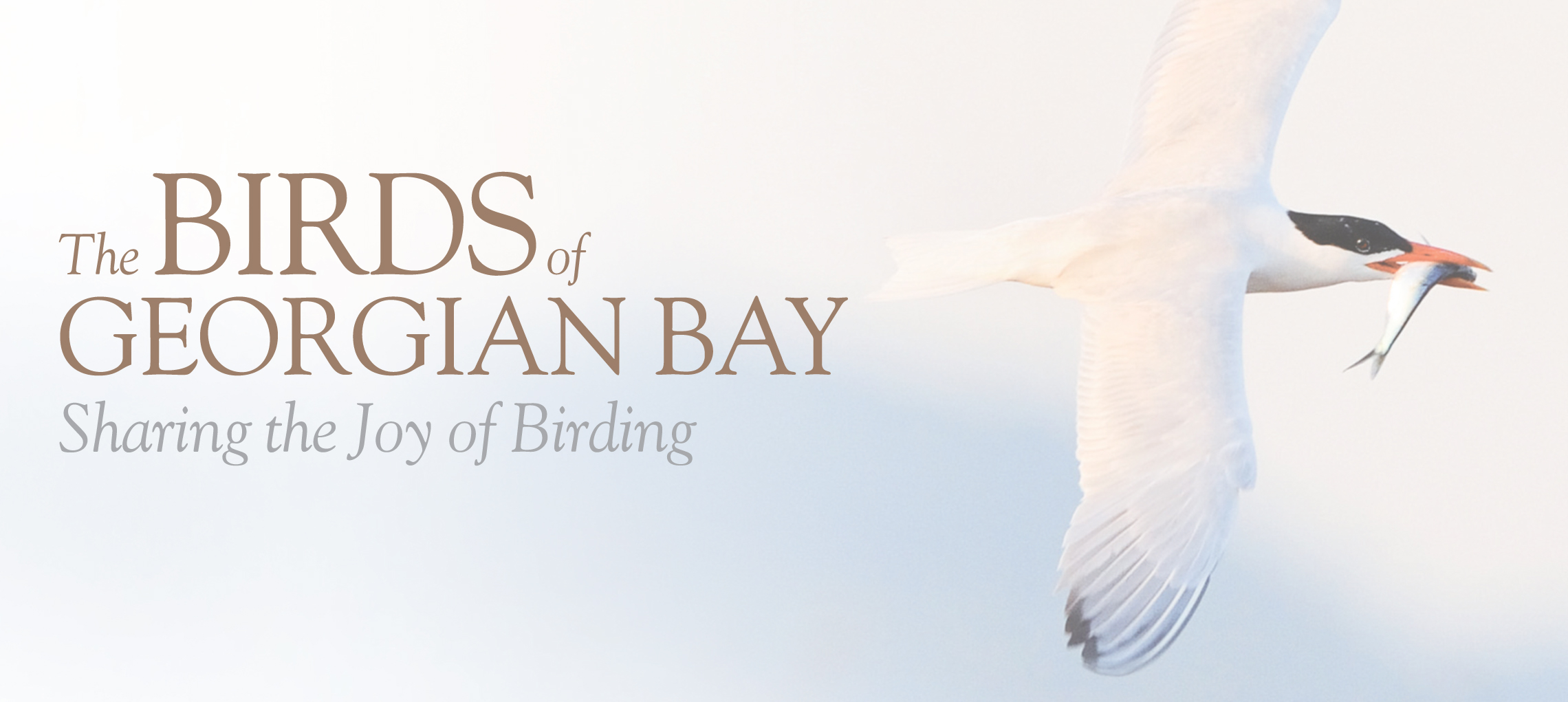 Birds of Georgian Bay