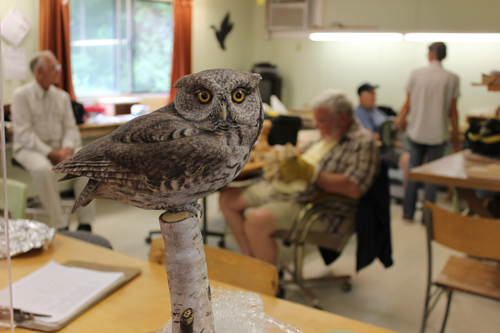 Winston Smith's Eastern Screech Owl